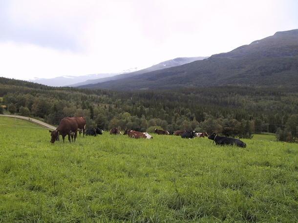 Foto innsendt fra Landbruksavdelingen i Rana