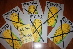 """Illustrasjon: Demonstrasjonsplakater """"Nei takk til GMO-mais. Arkivfoto: Kathrine Kleveland."""