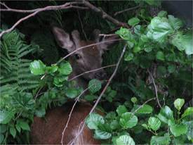 "Human og sikker jakt, samt ettersøk, står i fokus når seminaret ""Betre jakt"" vert skipa til på fleire stader i fylket."