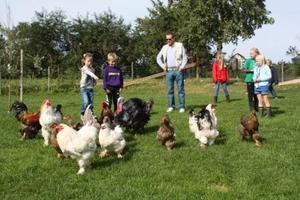 15 ulike hønseraser gikk rundt på tunet