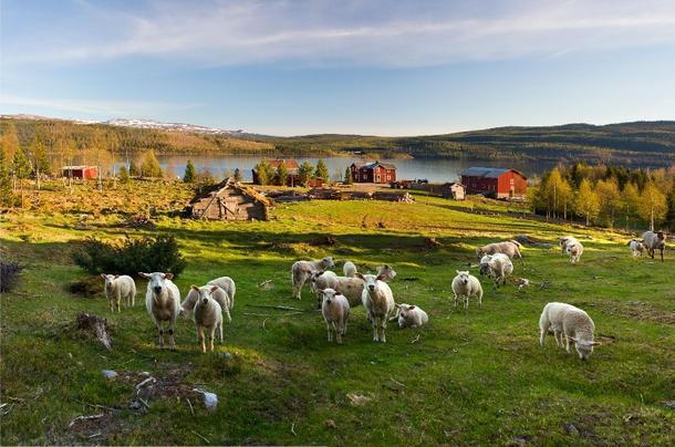 I en verden med økende behov for mat - hvor riktig og solidarisk er det av rike Norge å ikke utnytte den naturen vi har til å produsere mat, spør fylkesleder Kåre Peder Aakre i denne kronikken. (Foto: Steinar Johansen)