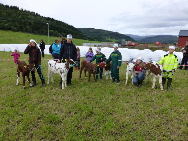 Deltagere i kalvemønstring: Margit Trondmo 9 år, Halvard Trodmo 11 år, Sondre Einrem 6 år, Sverre Einrem 9 år, Dina Hines 11 år og Trygve Hines 8 år.