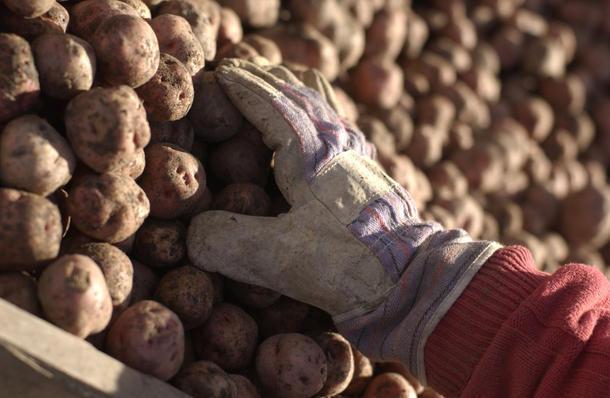 Potetprodusentene er en av gruppene som fikk et nødvendig løft i årets avtale.