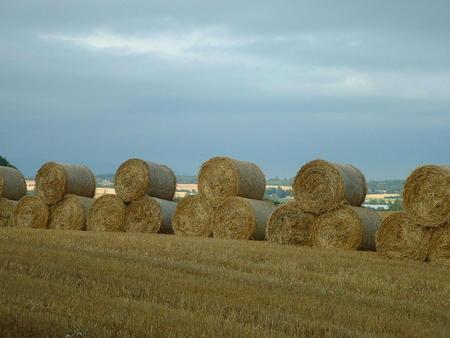 Halmballer blir verdifullt fôr i år.