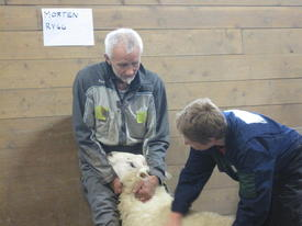Kvaliteten på ulla vert også sjekka