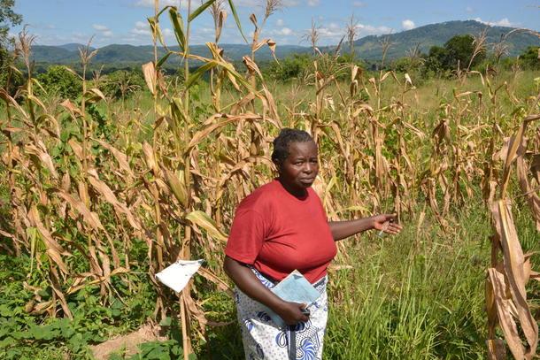Modellbonde Katie Mkanda viser fram forsøksfeltet med mais der ho tek i bruk nye dyrkingsmetodar, foto: Hildegunn Gjengedal.