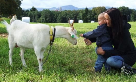 Ta med familien på et trivelig gårdsbesøk i helga. (Foto: Tove Hatling Jystad)