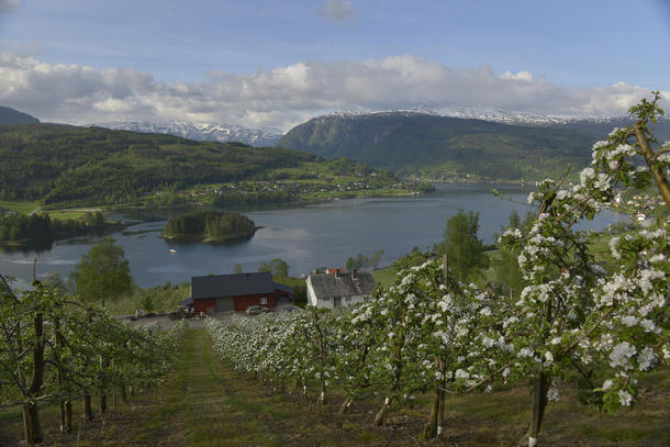 Landbruket i Norge er avhengig av en stabil økonomisk politikk.