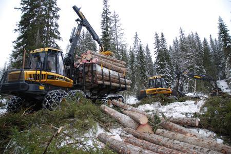 Skogsarbeid