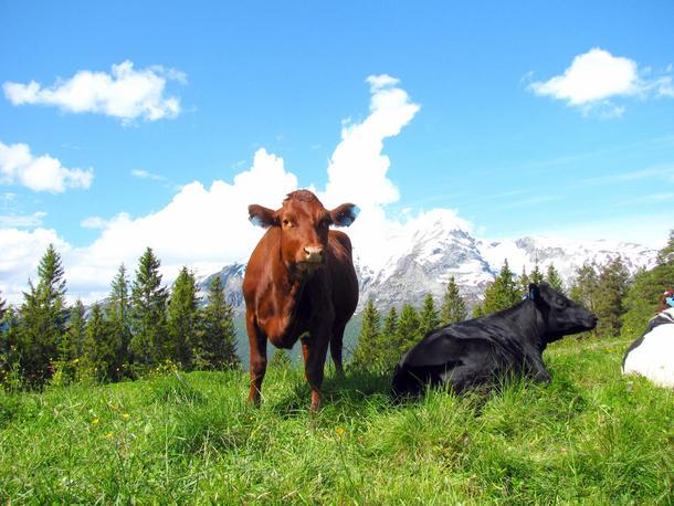 ..et land så flott og vakkert, med et robust, men også klima- og miljøvennlig landbruk som skaper arbeidsplasser, god og ren mat som sikret en god folkehelse, et spennende utvalg og et levende og spennende reiseliv., foto: Frida Meyer.