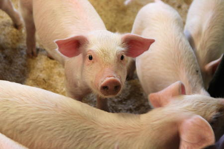 Illustrasjonsbilde gris