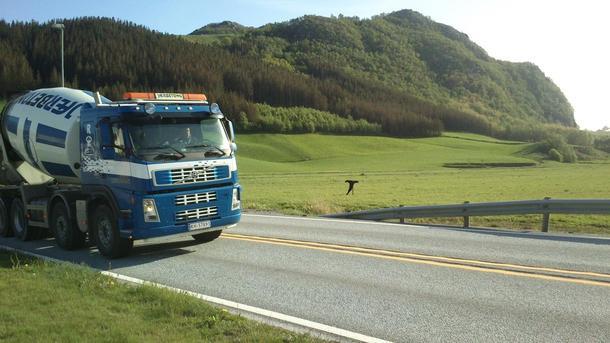 Langs E39 i Bjerkreim henger der dressar. Om poenget er om dei er tomme eller kven som er fugleskremsel kan ein tolka sjølv.