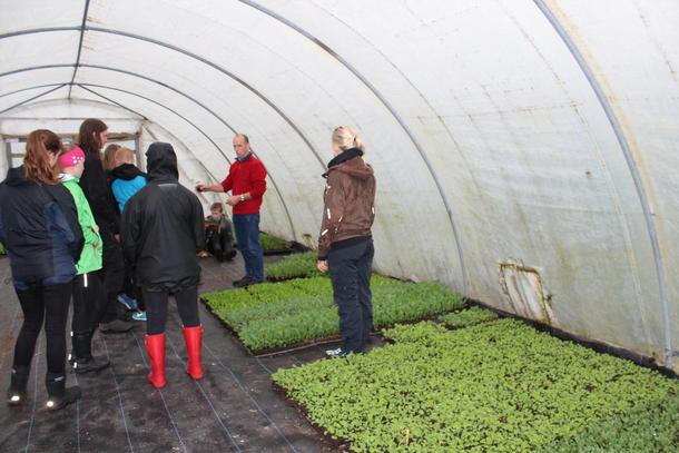 Tusenvis av kålplanter skal snart frå drivhuset og ut i jorda. Nils Jørgen Helgheim forklarar om produksjonen.