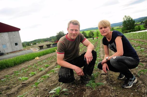 Må satses mer på forskning: Grønnsaksprodusentene Aud Mari Folden og Bent Ingar Fuglu mener det må settes av mer penger til forskning og utvikling av jordbruket i Norge. De to sier lønnsomheten i dagens norske landbruk må bli enda bedre slik at flere tør å satse.