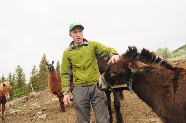 MANGE DYR: Lamaer, esler og minigriser bare noen av dyrene som er på gården til Ola Morten Græsli.