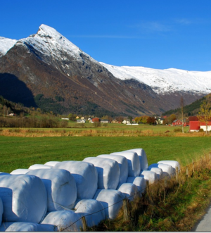 Fjærland ønskjer velkomen til Rundballefestival
