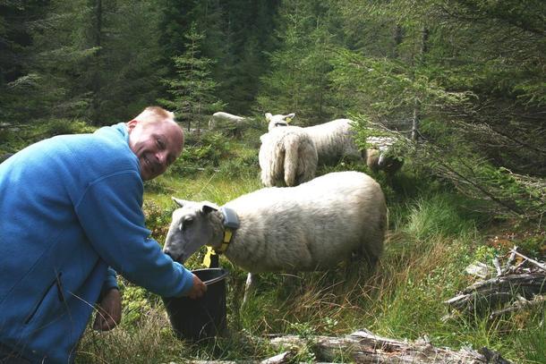 Statsekretær Lars A. Lunde på befaring med Løten og Vang beitelag. Foto: Kari Anne Kaxrud Wilberg, Norsk Sau og Geit