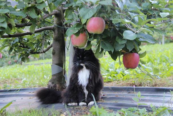 Kunnskap, trivsel og variert arbeid som sin eigen arbeidsgjevar gjer dte godt å vere ung bonde.  Katten på biletet har det også bra.