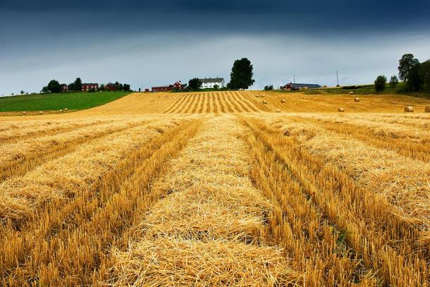 - Forslaget vil legge landbrukseiendommer og lokalsamfunn tilgjengelig for kapitalsterke interesser, mener fylkestinget, som vil beholde den norske landbruksmodellen. (Foto: Steinar Johansen)