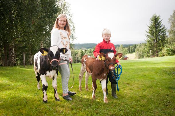 KALVEEIERE: Kine (10) og Simen (7 1/2) har hver sin kalv. Den brune heter Trine og den svarte har fått navnet Ida Kassandra. I løpet av sommerferien har Kine og Simen lært kalvene en rekke triks.