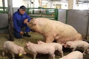 Lidvin Hage og nokre av grisane hans