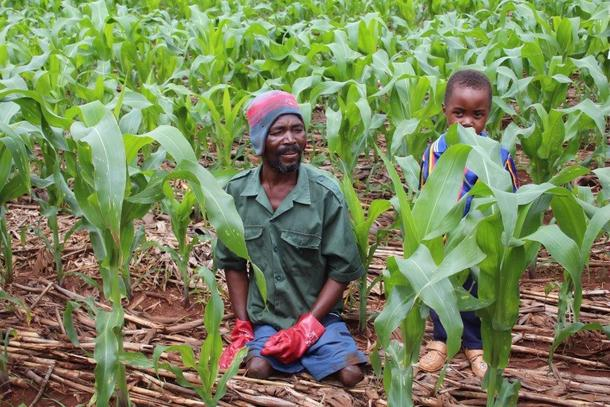 Modellbøndene lærer dyrking tilpassa klimaet i Malawi. Utvasking og erosjon er et stort problem, og det landbruket de lærer skal hindre det. Markdekking, redusert jordarbeiding, bruk av plantemateriell til å dekke jorda samt kompostering og bruk av husdyrgjødsel er viktig kunnskap som bøndene lærer. Modellbonde Paul Ngondola og sønnen hans.