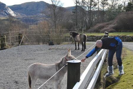 Esel og Leif Anders Vold ST Bondelag