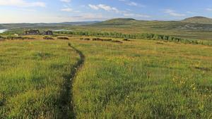 Store beiteressurser i Langsua Nasjonalpark. Ressurser som går til spille om de ikke beites. Foto fra turapp til Langsua. Fotograf: Thor Østby