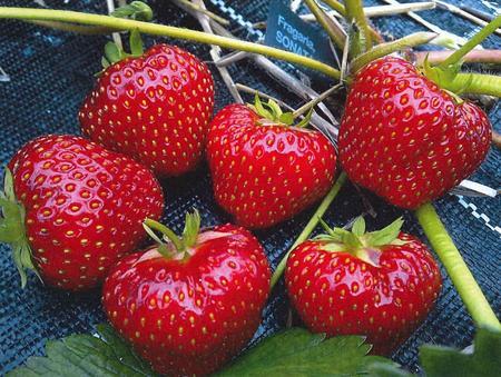 Illustrasjonsbilde: Friske jordbær