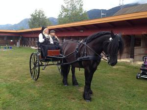 Køyreoppvisning med hest