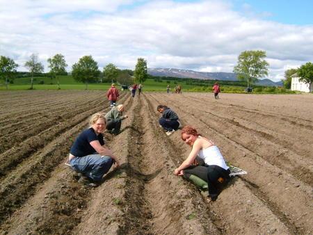 Elever i åkeren på Fosen FHS Foto: Fosen FHS