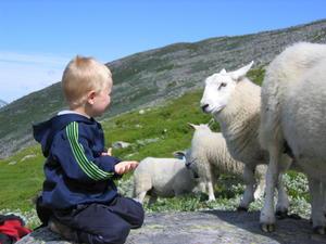 Foto: Jostein Skår Støfring