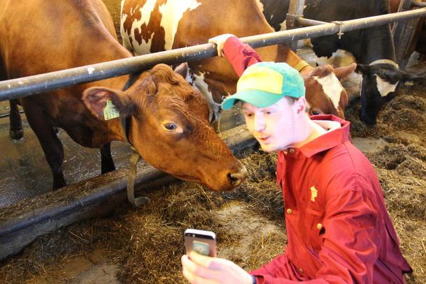 Ein av deltakarane sikrar seg ein selfie med ei ku. Foto: Norges Bygdeungdomslag