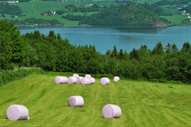 Rosa rundballer på nyslått eng ved Trondheimsfjorden