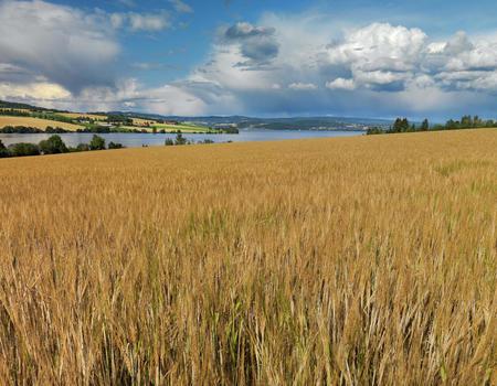 Kornåker i Hedmark
