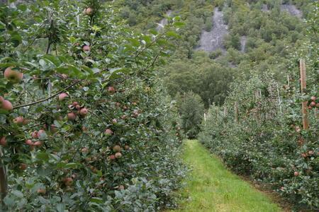 a98428a8 I Lærdal produserer dei mellom anna epler, gulrøter og blomkål. Det er med  andre ord mykje godt å glede seg til framover.