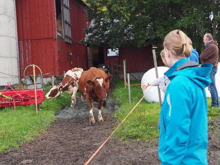 Kuslipp med unge politikere i Sør-Trøndelag