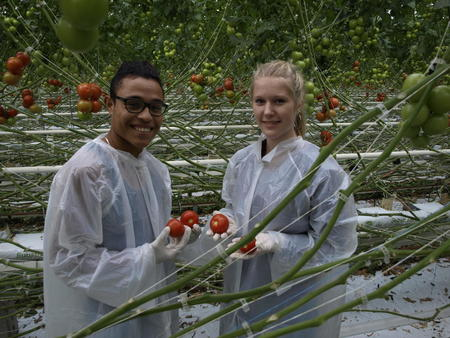 elever med tomater