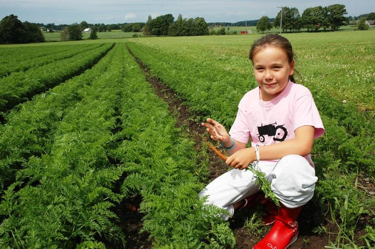 Landskapsbilde med ung 4 h jente