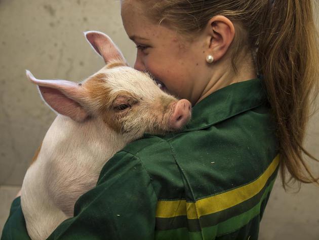 Jente med gris