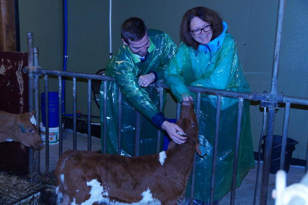 Me fekk inn å sjå i båsfjøsen. Torbjørn Vereide og Ingrid Bjørketun Heggø (Stortingsrepresentant Ap), nytta høve til å sjå på kalvane.