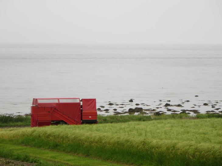 Grønn kornåker mot sjøen på Viggja