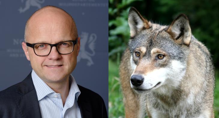 Vidar Helgesen og ulv. Montasje