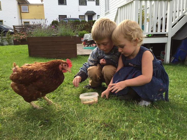 Høner i hagen. Foto: Pandora Film