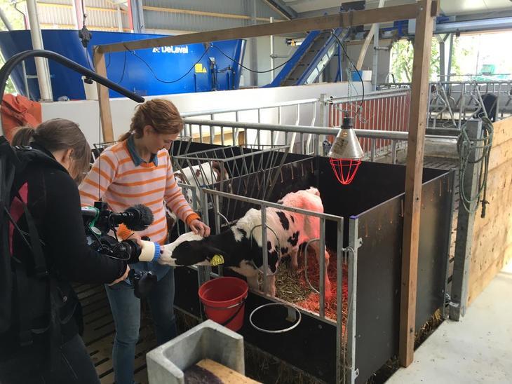 Fôring av kalver hos Erik Willgoh på Huso. Foto Pandora film.