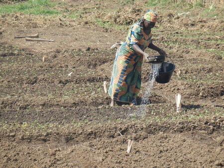 Kvinne vanner åker i Sambolabo