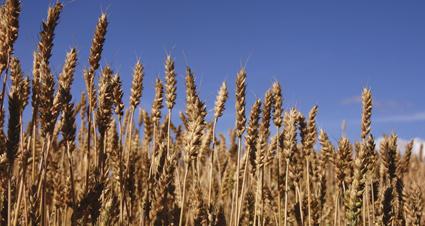 økologisk landbruk