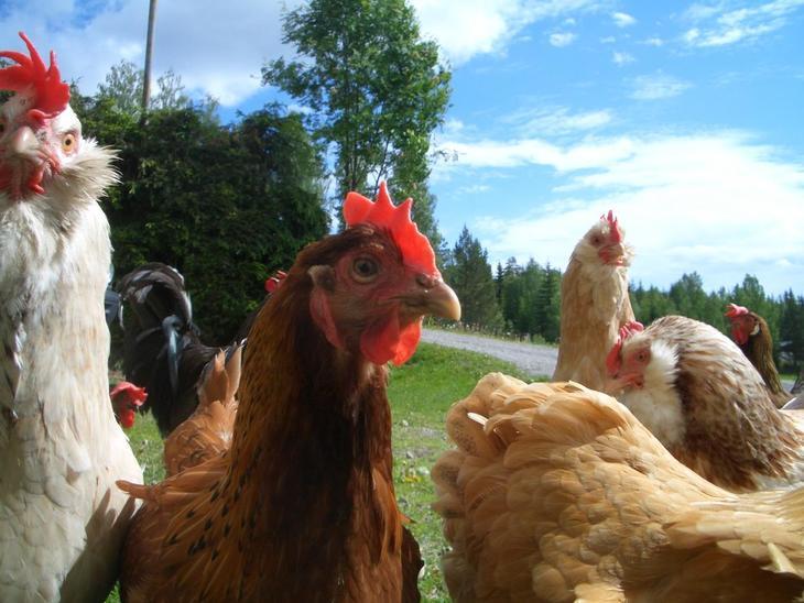 Reglene for økologisk landbruk endres 2017