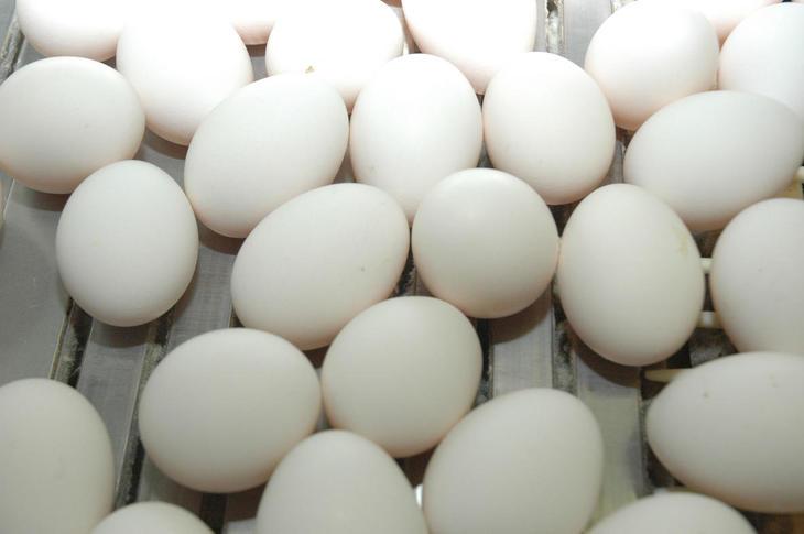 eggproduksjon