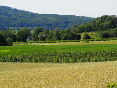 landskap korn og eple